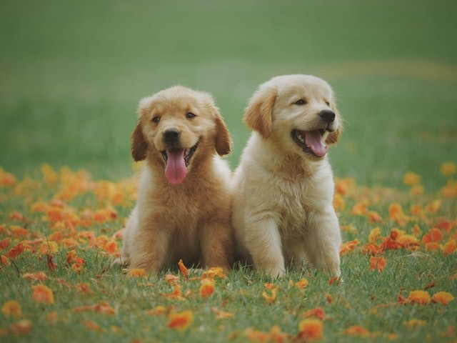 CBD Oil For Dogs: History And Benefits