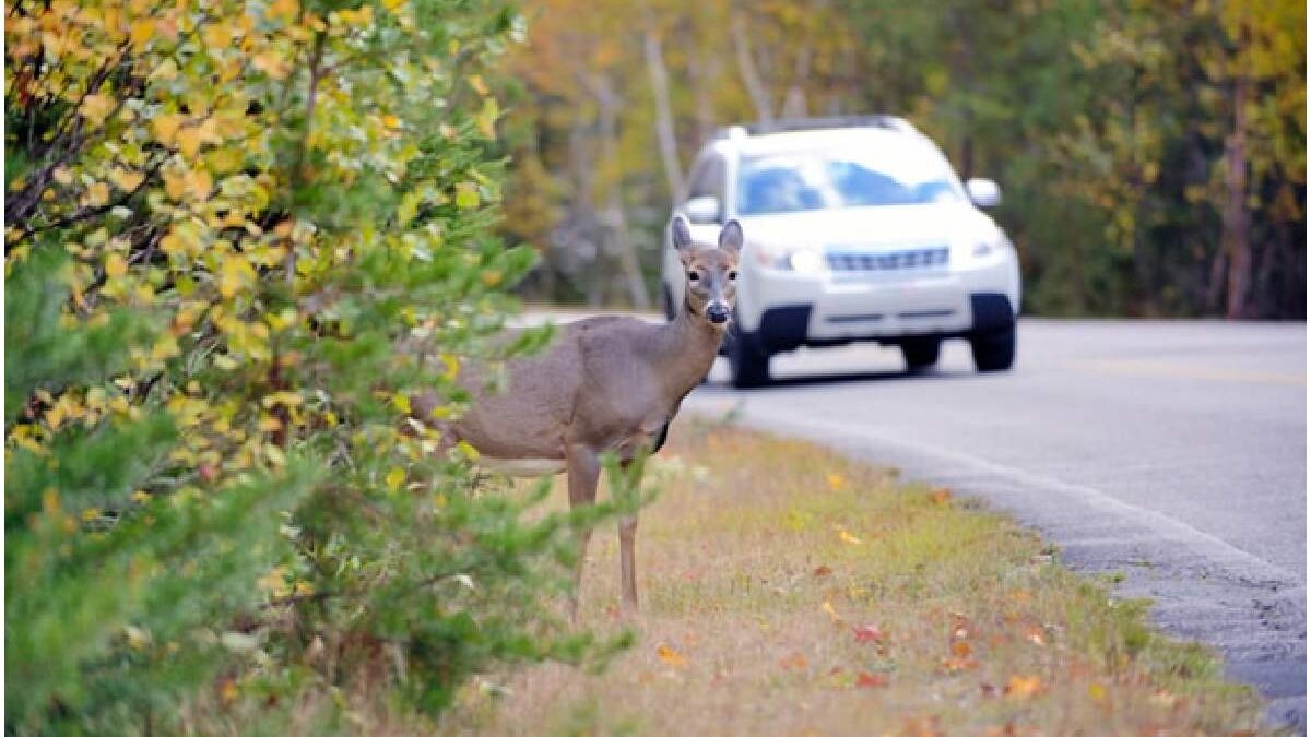 8 Tips to Avoid Vehicle Accidents Involving Animals